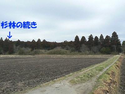 P1290073sa.jpg