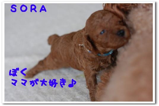 ria 016_1