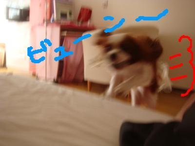 DSC03811.jpg