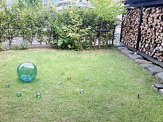 紗麻のお庭(すずめが虫を食べに来てました)