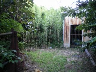 養豚場跡(第二豚舎隣の竹林入口)