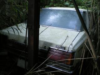 養豚場跡の廃車車両2『日産グロリア』その3