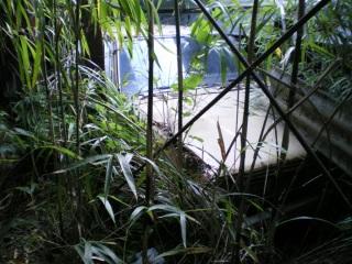 養豚場跡の廃車車両4『日産サニー』その1