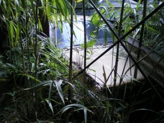 養豚場跡の廃車車両4『日産サニー』その2