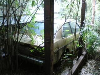 養豚場跡の廃車車両4『日産サニー』その3
