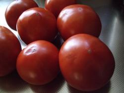 お隣さんのトマト