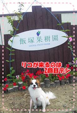 飯塚果樹園さん