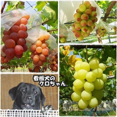 飯塚果樹園