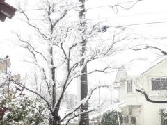 0301yukiniwa1.jpg