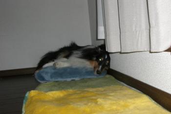 寝てると思ったら起きてた(^^;)