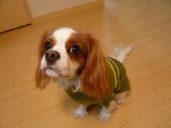 あーママさん手編みセーター