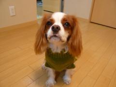 あーママさん手編みセーター正面