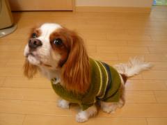 あーママさん手編みセーター2