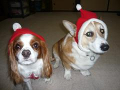 2008 クリスマスバージョン