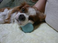 ボール枕で爆睡中