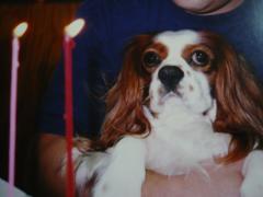 リロ2歳の誕生日