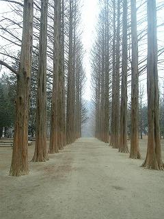 冬ソナ林道