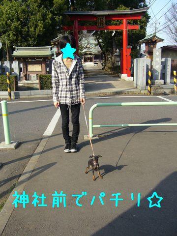 お散歩デビュー2