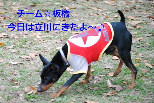 DSC_0093_20091124144811.jpg