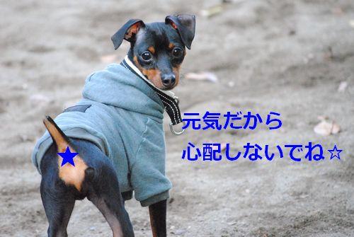 DSC_0212.jpg