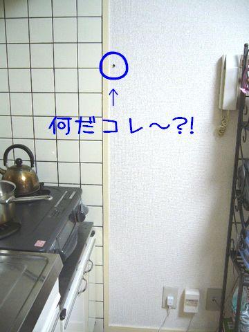 P1060497.jpg