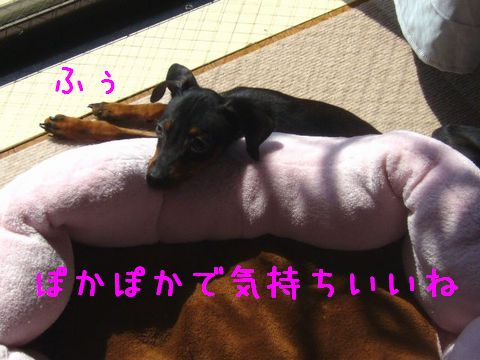 Z1.jpg