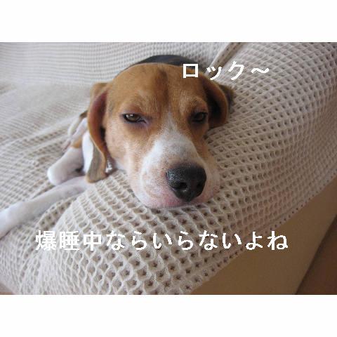 bakusui_20080703093945.jpg