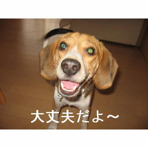 daijyouubu.jpg