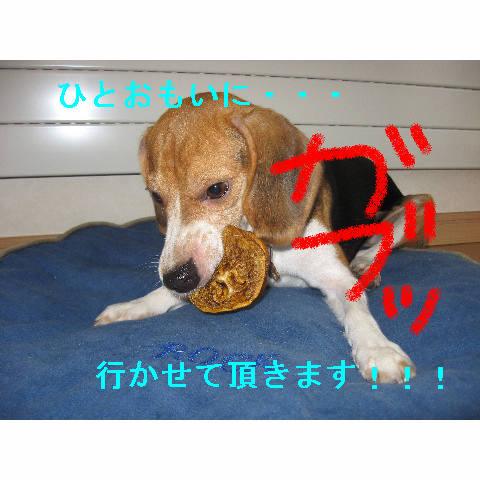 gabu_20080812091159.jpg