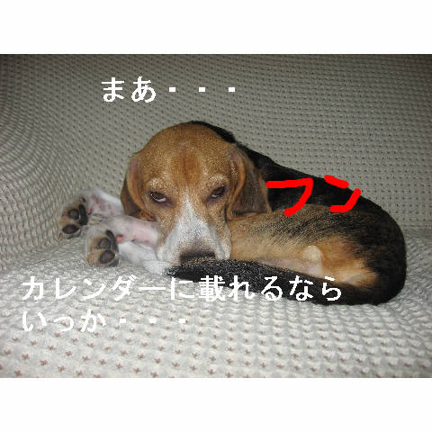 ikka_20080530085856.jpg