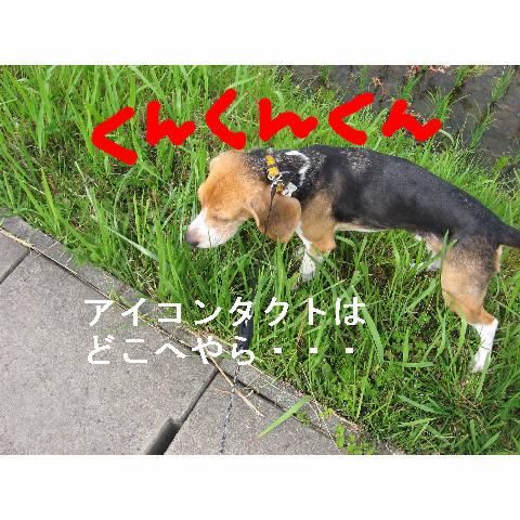 kunkun_20080612091324.jpg