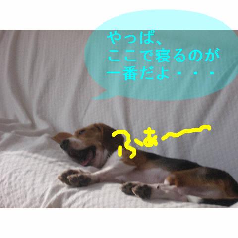 yappakoko.jpg