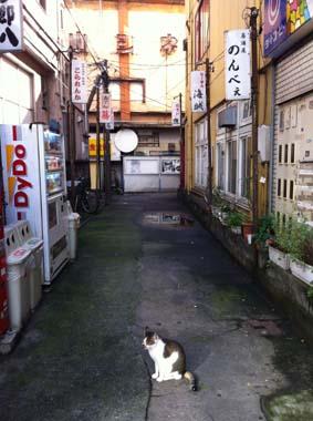 富山朝の飲み屋街とネコ