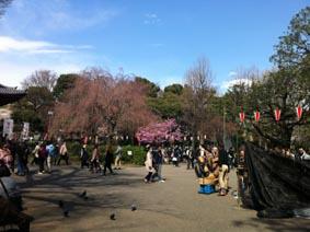 花見にはちと寒い上野公園