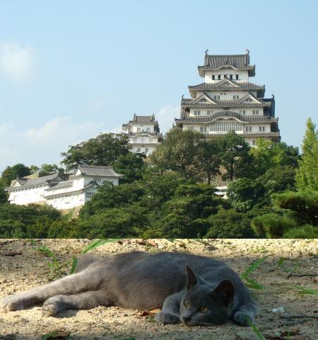 姫路城と猫