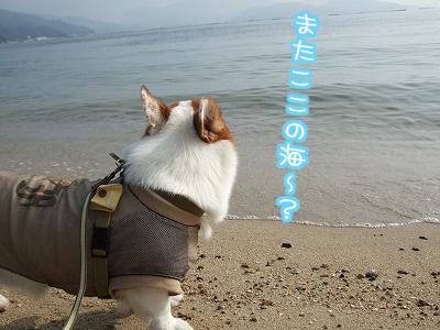 またここの海?