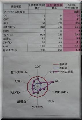 P1110125.jpg