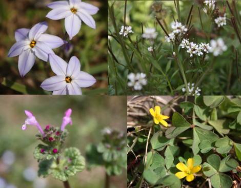 春分の日の庭'09