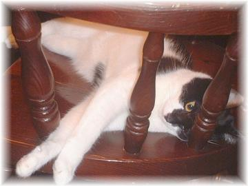 椅子の上の誘惑