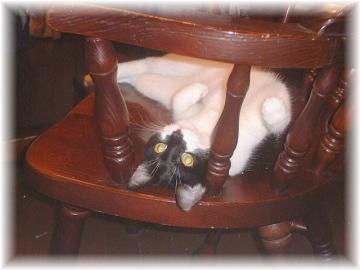 椅子の上の誘惑b