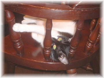 椅子の上の誘惑c
