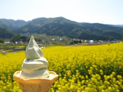 菜の花ソフトクリーム@菜の花公園