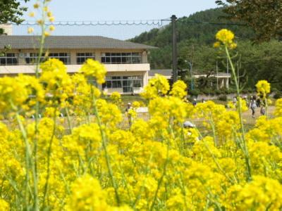 東小学校@菜の花公園