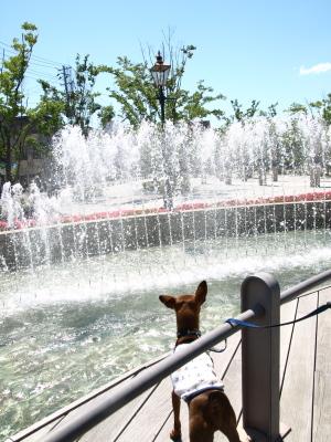噴水とアクア@Orange Pecoe (オレンジペコ)