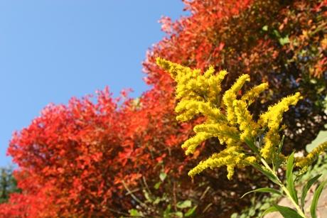 近所の秋2