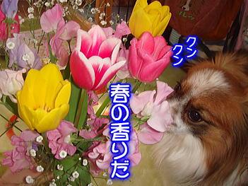 3.15春の香り