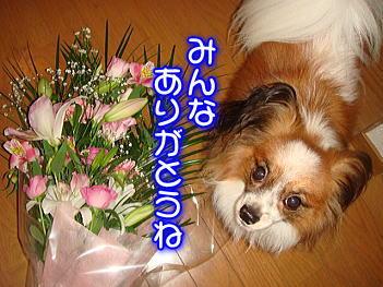 11.3お花
