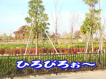 11.7公園