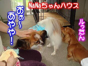 11.22ナナちゃんハウス