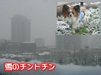11.22雪のチントチン